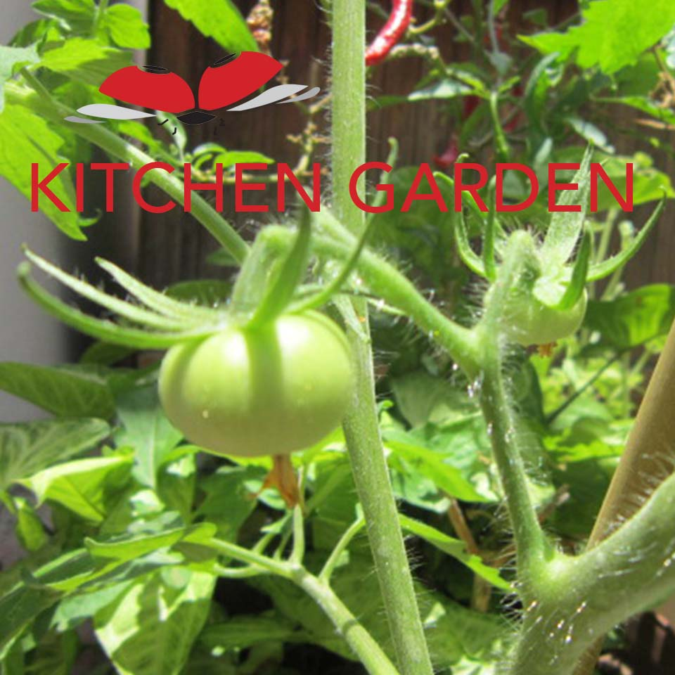 In these days of drought driving up the costs of just about everything, you can feed your family fresh veggies, starting with the humblest of kitchen gardens.