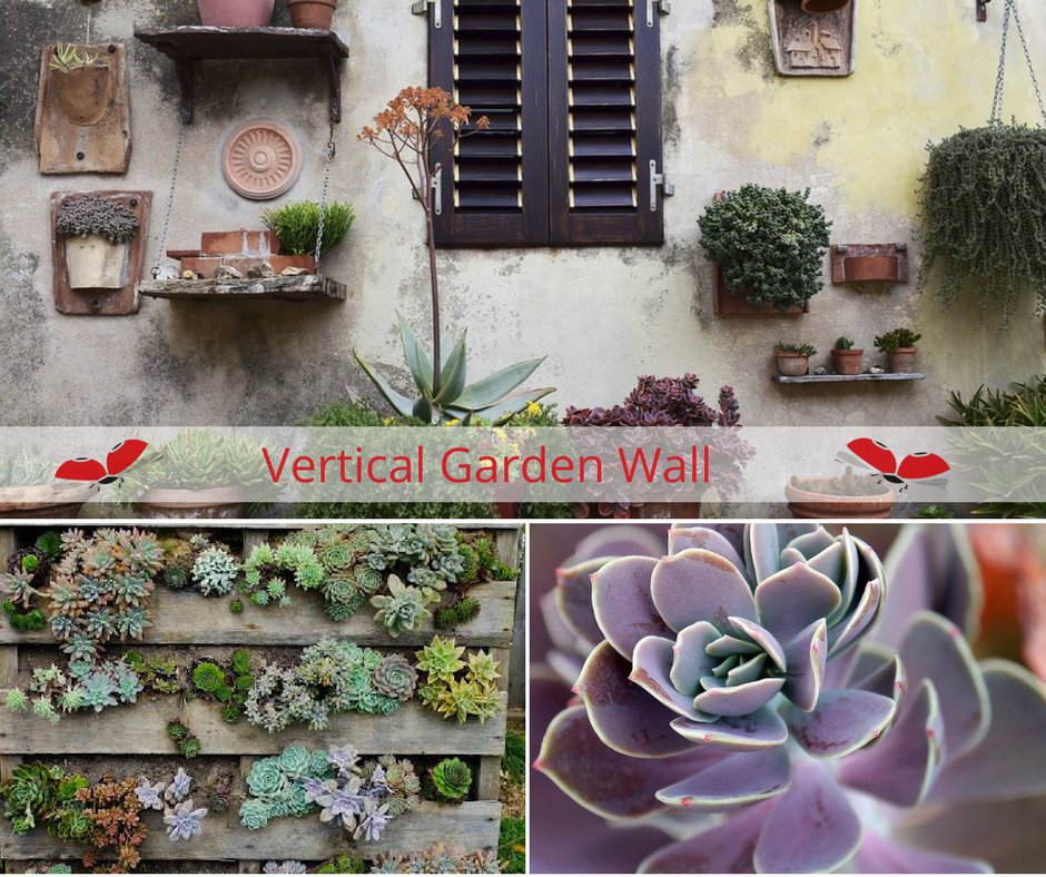 Vertical gardens provide an opportunity to use every bit of space available, they are also a way to create living artworks.