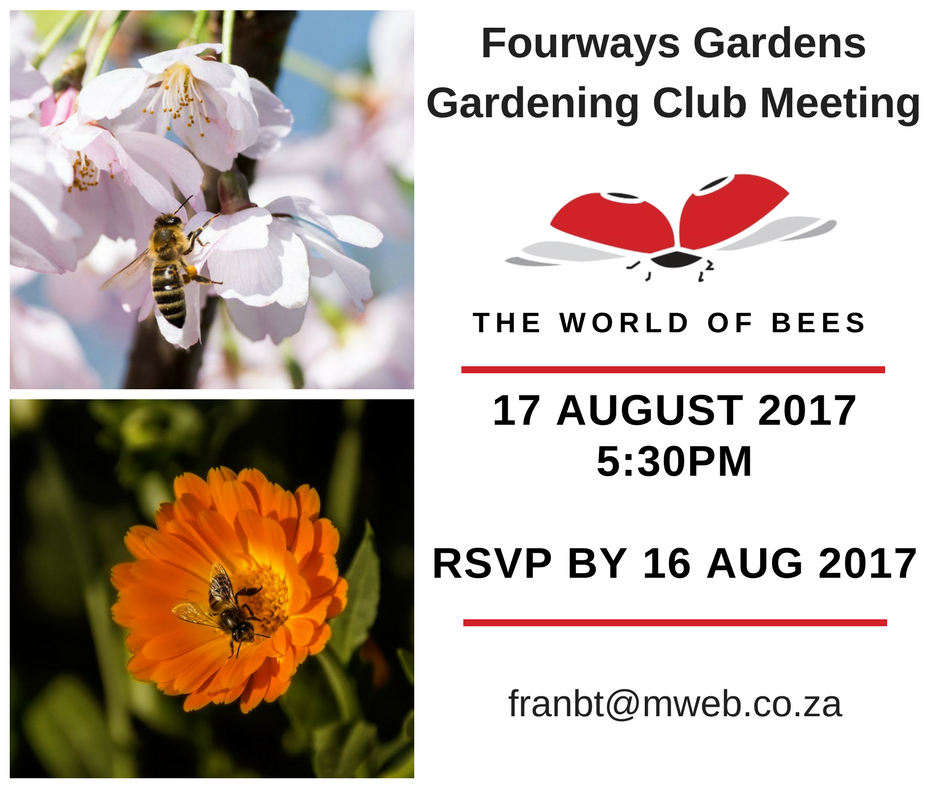 Bees around the world are dying, find out more about what is happening with the bees in our area and what you can do to help.